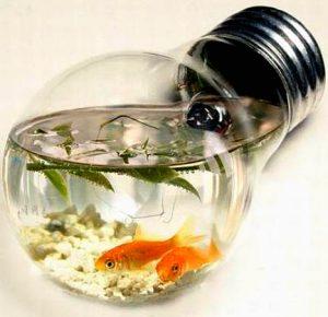 accessori, acquario, pesci