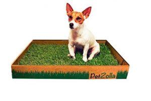 Lettiera per cani PetZolla