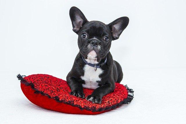 miglior lettiera per cani di piccola taglia