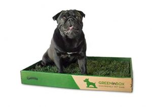 Lettiera per cani GreenInBox