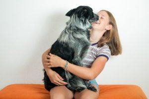 migliore lettiera per cani maschi