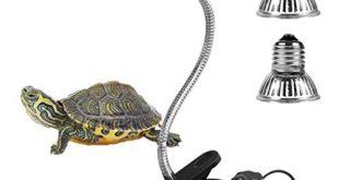 Le migliori tartarughe del 2021