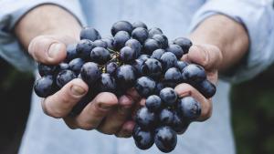 uva, rossa, longevità, integratore, antiossidante, potente